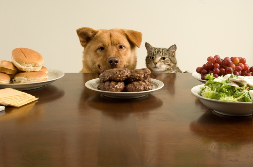 Grain free dog and cat