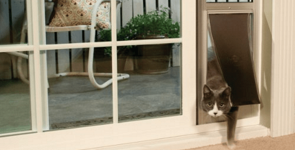 10 Must Have Cat Products For When You Re Away From Home