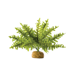Exo Terra Exo Terra Boston Fern
