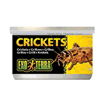 Exo Terra Exo Terra Crickets Small