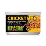 Exo Terra Exo Terra Crickets Xlarge 34g