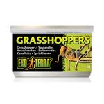 Exo Terra Exo Terra Wild Male Grasshoppers Small 34g