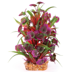 Kazoo Kazoo Combination Plant Thin Leaf With Maroon Flower