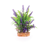 Kazoo Kazoo Combination Plant Thin Leaf With Purple Flower
