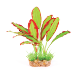 Kazoo Kazoo Silk Plant Medium Leaf Green Red