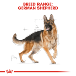 royal-canin-german-shepherd-(adult) secondary 1