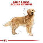 royal-canin-golden-retriever