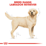 royal-canin-labrador secondary 1