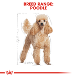 royal-canin-poodle secondary 1
