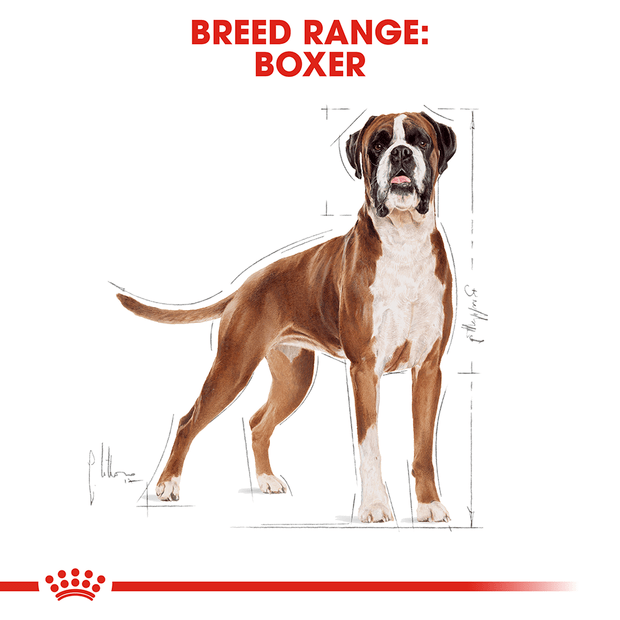 royal-canin-boxer secondary 1