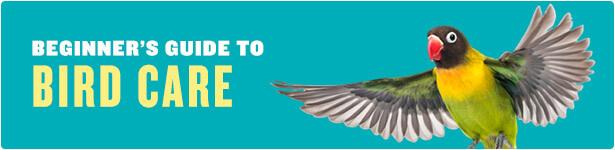 Bird Care for Beginners
