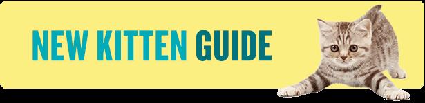 New Kitten Guide