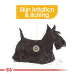 royal-canin-mini-dermacomfort-care-adult-dry-dog-food