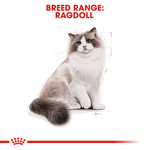 royal-canin-ragdoll-adult-dry-cat-food