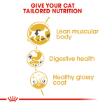 royal-canin-siamese-adult-dry-cat-food