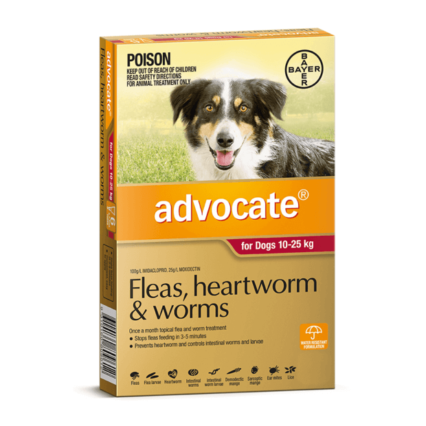 advocate-dog-large-red