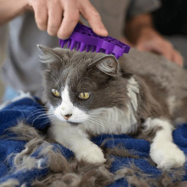 kong-cat-zoom-groom