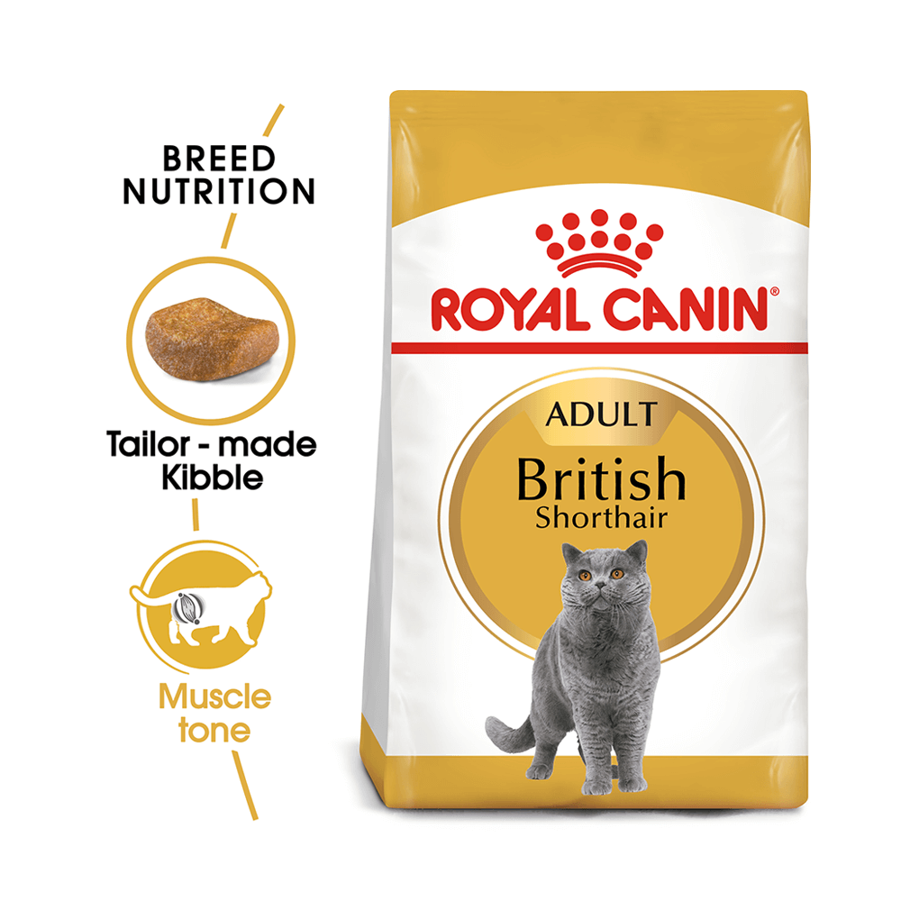 royal canin dry cat food