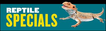 Specials reptile